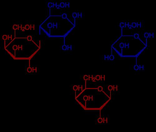 digestión de la lactosa en glucosa y galactosa