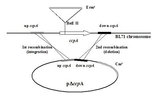 cap u00edtulo 2  complementation of a delta